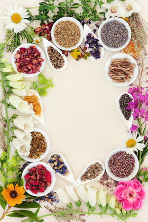 Healing herb and flower selection used in herbal medicine forming a border over speckled handmade cream paper background. Stock Photo