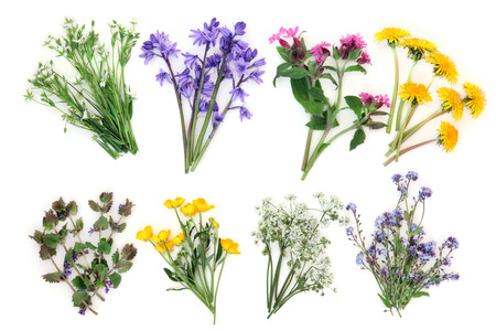 forget me not: Spring wildflower selection over white background. Stichwort, bluebell, rose campion, dandelion, ground ivy, buttercup, cow parsley and forget me not. Left to right, top then bottom row.