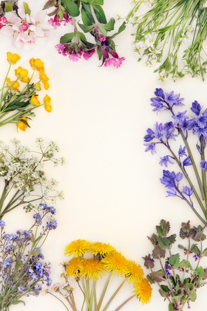 Spring wild flower abstract border over cream background. Stock Photo