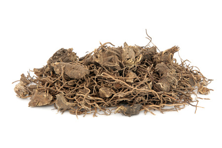 menstrual: Black cohosh root herb used in natural alternative herbal medicine over white background. Used to treat menopausal and pre menstrual symptoms in women. Actaea racemosa.
