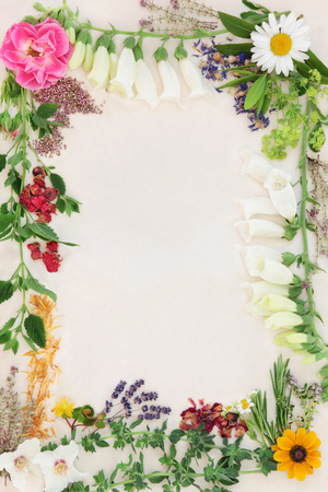 Flower and herb selection used in herbal medicine forming an abstract border over speckled cream paper background. Stock Photo