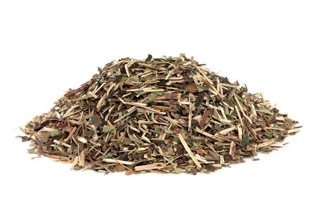 skullcap: Skullcap herb used in natural alternative medicine over white background. Scutellaria.