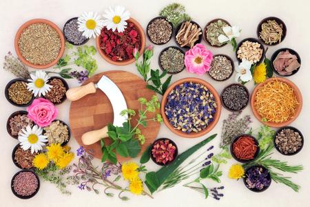 medicina natural: Flor natural y selección hierba usada en la medicina natural hecha a mano sobre papel manchado de fondo crema.