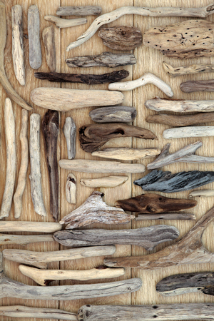 natural selection: Natural driftwood abstract on oak wood background.