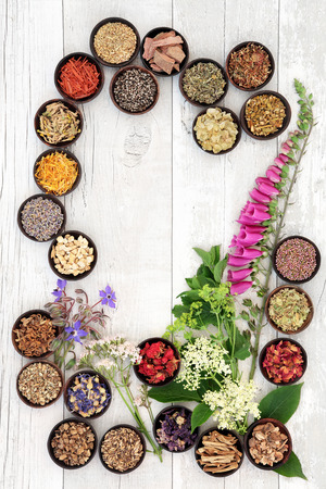 herbal background: Naturopathic flower and herb selection used in herbal medicine in wooden bowls over white wooden distressed background. Stock Photo