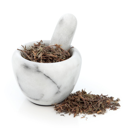 tulasi: Tulsi holy basil herb used in natural alternative herbal medicine in a marble mortar with pestle over white background. Stock Photo