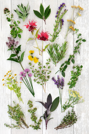 natural selection: Fresh herb selection used in natural alternative medicine and also for culinary purposes over distressed white wooden background. Stock Photo