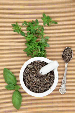 tulsi: Fresh basil herb varieties with dried tusli holy basil in a mortar with pestle and silver spoon used in natural herbal medicine over bamboo background. Stock Photo