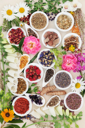 herb medicine: Large herb and flower selection used in traditional herbal medicine loose and  in porcelain bowls over cream background.