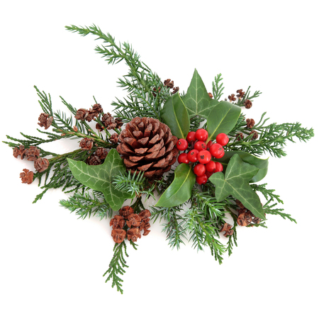 Winter floral arrangement with holly and red berries, ivy, pine cones, cedar cypress and fir over white background.