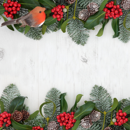 christmas robin: Winter and christmas abstract background border with robin decoration, holly, mistletoe, snow covered  fir and pine cones over white distressed white wood Stock Photo