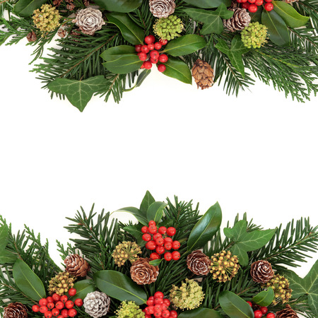 stock photo winter and christmas greenery border with holly ivy pine cones cedar cypress and fir leaf sprigs over white background - Christmas Greenery