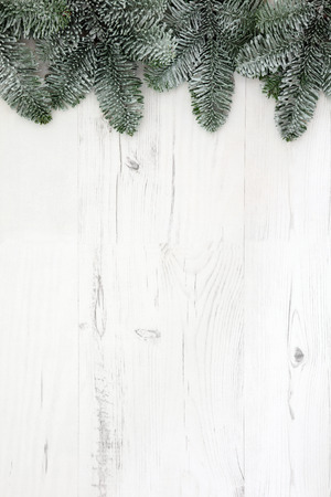 distressed background: Christmas abstract background border with blue spruce fir and snow over distressed white wood.