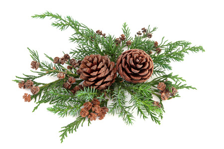 Winter flora arrangement with pine cones, cedar cypress and fir over white background.