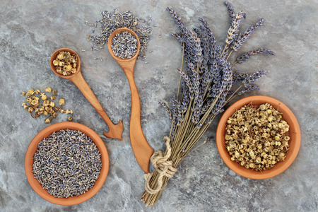 herb medicine: Lavender and chamomile herb flowers used in herbal medicine with calming and soothing qualities to assist sleeping and anxiety disorders.