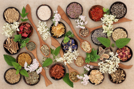 Herbal medicine selection of fresh and dried herbs and flowers used in natural alternative remedies. Foto de archivo