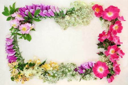 medicina natural: flores silvestres frontera con flores inglés utilizados en la medicina natural alternativa natural que forman un fondo abstracto. Foto de archivo