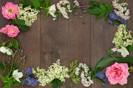 natural selection: Natural alternative medicine selection with dried and fresh flowers and herbs forming a border on oak background. Stock Photo