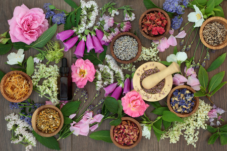 herb medicine: Naturopathic flower and herb selection used in natural alternative herbal medicine on oak background. Stock Photo