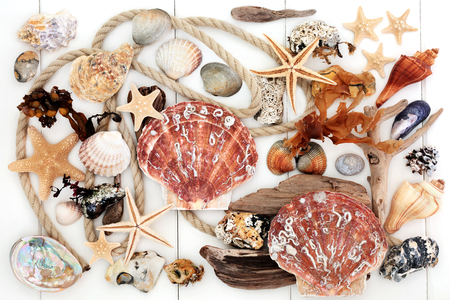 Seashell, driftwood, seaweed and rock abstract collage on white wood background. Stock Photo