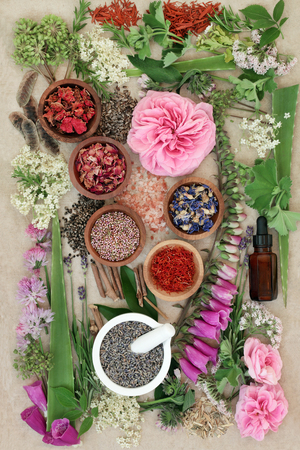 Herbal medicine selection of fresh and dried herbs and flowers used in natural alternative remedies on hemp paper background. Stock Photo