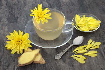 herb medicine: Chrysanthemum herb flower tea with glass tea cup with ginger spice and old spoon, also used  in traditional chinese herbal medicine.