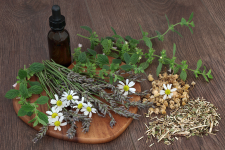 skullcap: Calming and sleeping herb selection of chamomile, lavender, lemon balm and skullcap used in natural herbal medicine with essential oil bottle on oak background.