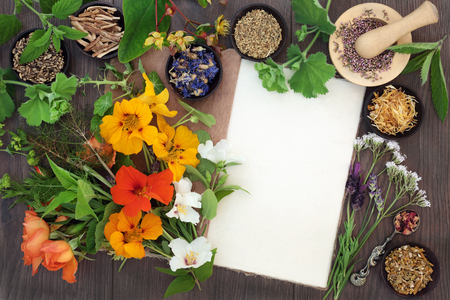 Natural alternative medicine selection with dried and fresh flowers and herbs with hemp notebook on oak background. Stock Photo