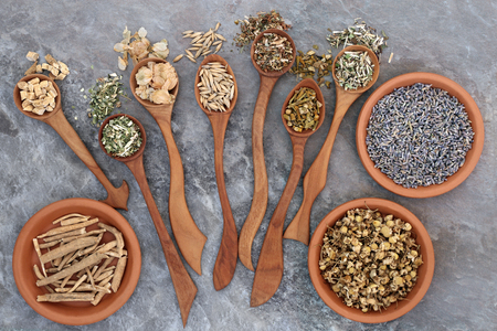 skullcap: Herbs to heal anxiety and sleeping disorders using alternative herbal medicine in wooden spoons and terracotta bowls.