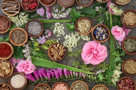 herb medicine: Large dried and fresh herb and flower collection used in natural alternative medicine. Stock Photo