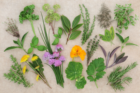 Fresh herb food selection on hemp paper background. Herbs also used in natural herbal medicine.