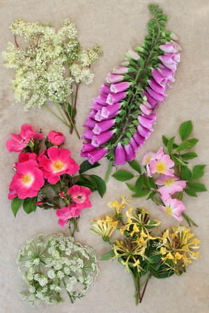 Summer wildflower selection with meadowsweet, red and pink wild roses, honeysuckle, foxglove and cow parsley over hemp paper background. Stock Photo