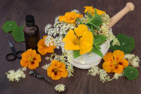 homoeopathic: Natural flower and herb medicine with meadowsweet, queen annes lace, nasturtium, angelica seed heads and mint with essential oil bottle. Stock Photo