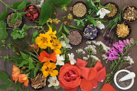 Flower and herb selection used in natural alternative herbal medicine with mortar and pestle on oak background. Stock Photo