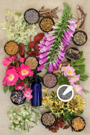 Natural herb and flower collection used in alternative herbal medicine remedies on hemp paper background. Stock Photo