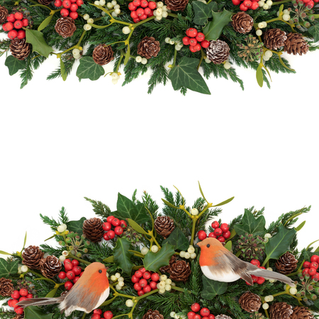 enebro: Winter background border with robin decorations, holly, ivy, mistletoe, fir and pine cones on white. Foto de archivo