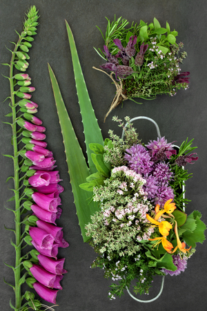 Herb and flower selection used in natural alternative herbal medicine on slate background. Top view.
