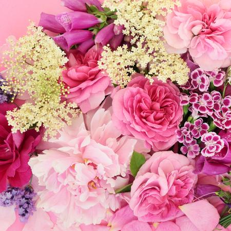 Summer flowers and herbs used in natural alternative herbal medicine on pink background. Standard-Bild