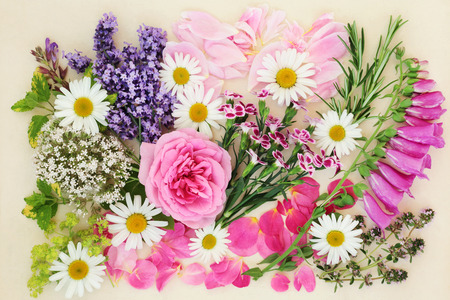 Flowers and herbs used in natural and chinese herbal medicine on cream background. Top view, flat lay.