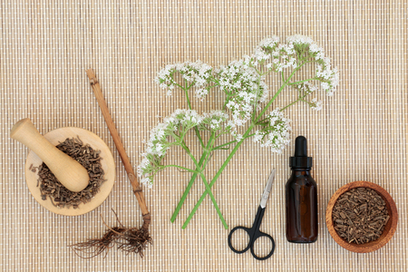 Valerian herb root, flowers & tincture on bamboo background. Used in alternative & traditional herbal medicine to improve mood, reduce stress & insomnia. Valeriana officinalis.