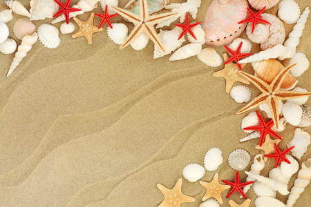 Seashell selection including starfish varieties on a sandy beach background with copy space,