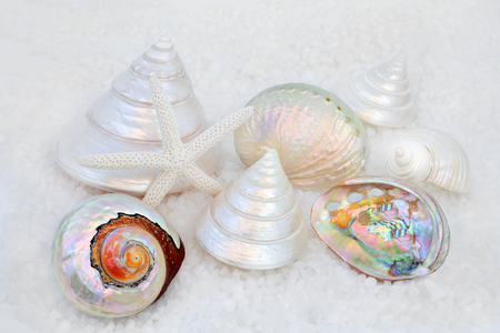 Seashell collection with mother of pearls shells on course sea salt forming a background.