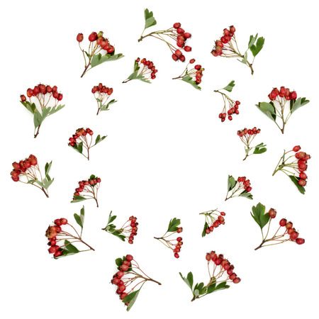 Abstract hawthorn berry wreath on white