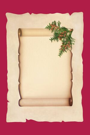 Old scroll on parchment paper with cedar cypress leaf sprig isolated on red background. For a traditional winter or Christmas theme.