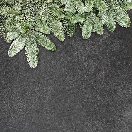 Winter and Christmas background border with snow covered spruce fir on grunge grey background with copy space.