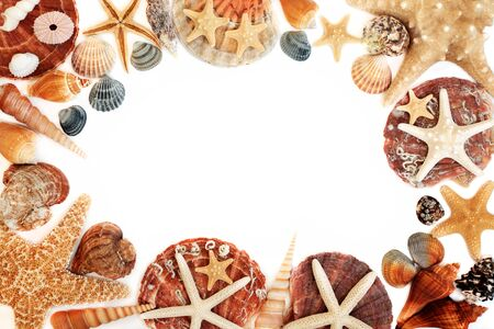 Seashell abstract background border on white with a selection of shells. Top view with copy space.