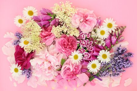 Summer flowers and herbs used in natural alternative herbal medicine on pink
