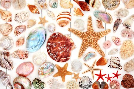Large seashell collection on rustic white wood Banco de Imagens