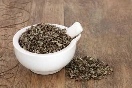 Mousear herb leaf in a mortar with pestle used in herbal medicine to treat bronchitis, whooping cough, asthma and coughs & can help with fluid retention, intestinal gas & colic. Piloseller officinarum