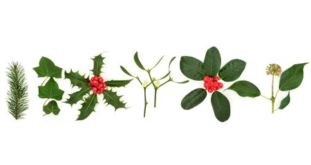 Traditional winter and christmas flora and fauna with leaves and beries on white background.